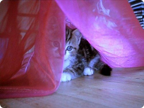 Gato escondido 10