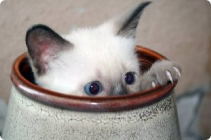 Gato escondido 2