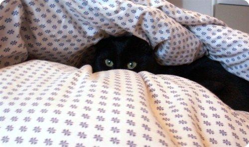 Gato escondido 7