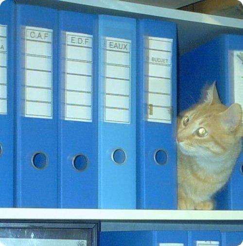 Gato escondido 8