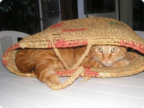 Gato escondido 9