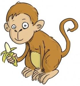 Macaco 1
