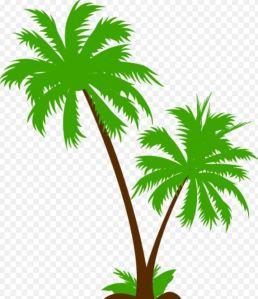 Palmeira 1