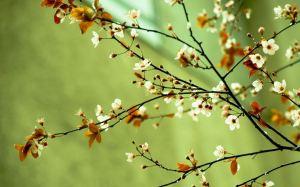 Primavera 2