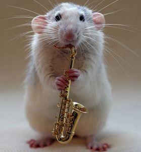 Rato 2