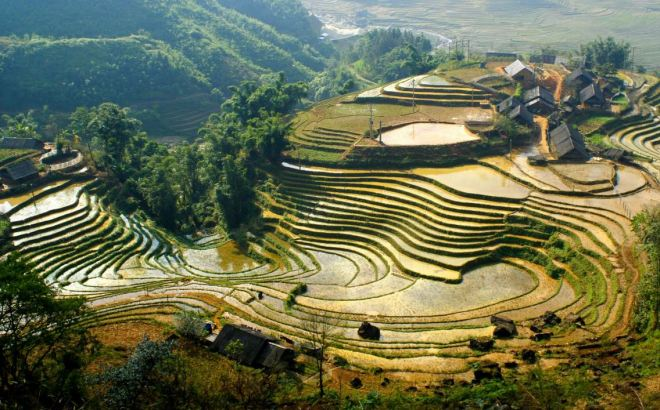 Vietnã – arrozais escalonados nas montanhas do norte (arroz de banhado)