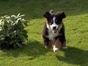 Cachorro 15