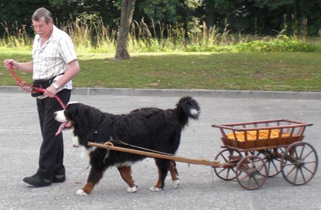 Cachorro 17