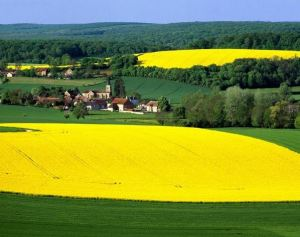 Campo de colza na Europa