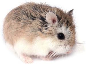 Rato 3