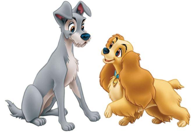 Cachorro 27