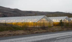 Islândia: estufas aquecidas por geotermia