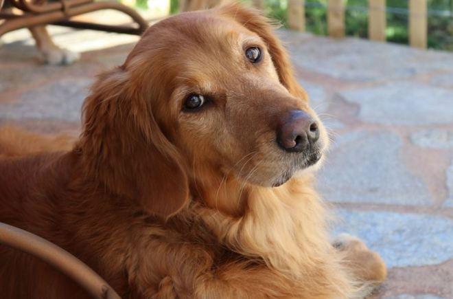 cachorro-39
