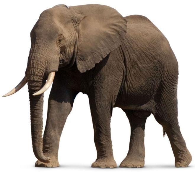 elefante-3